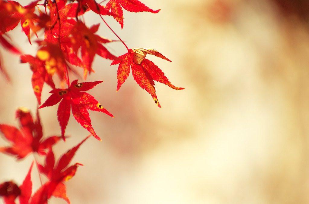 autumnal-leaves